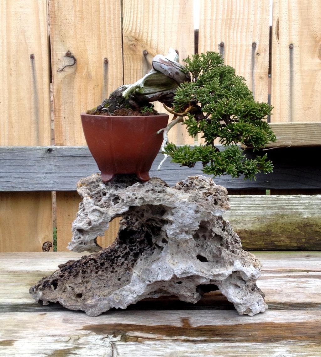 Bonsai Wiring How To New Era Of Diagram Techniques Shohin Around My Garden 2 Japanese Pots Blog Pseudocydonia Sinensis Branches